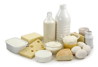 Eat Low fat Dairy to Lose Weight