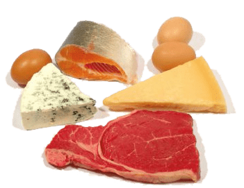 Eat Protein to lose weight